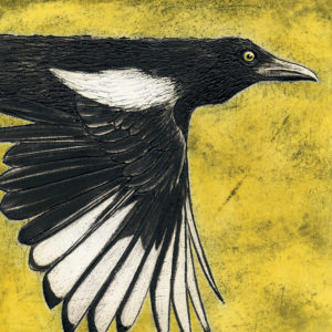 Magpie on Yellow