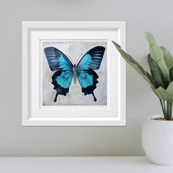 Ulysses Butterfly framed