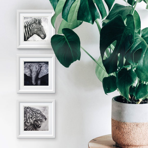 Zebra framed