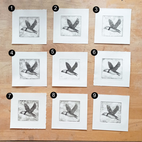 Puffin Drypoint Choices
