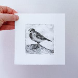 Feisty Sparrow Drypoint