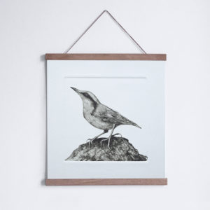 Nuthatch drypoint