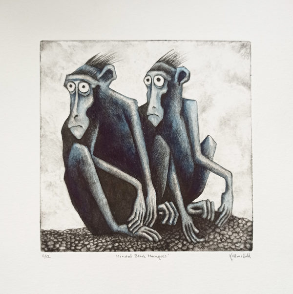 Crested Black Macaques Drypoint